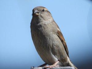 the-sparrow-5044243_960_720