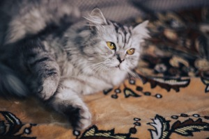 cat-5031734_1280 pixabay