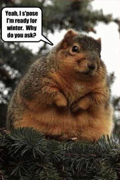 funny-squirrel-memes-3