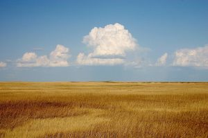 Prairie 1200px-Cumulus_Clouds_over_Yellow_Prairie2