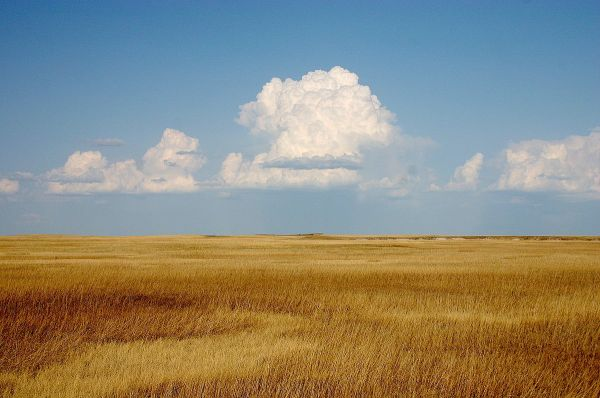 Prairie 1200px-Cumulus_Clouds_over_Yellow_Prairie2